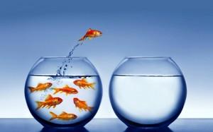 introvert-pic-goldfish