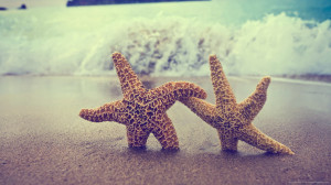 starfish-helping-each-other